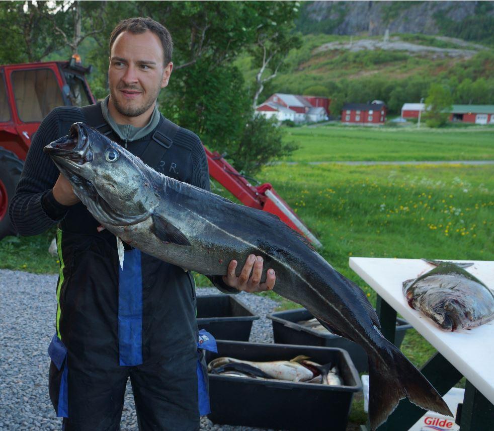 schöner Seelachs aus Sørvika Region Roan