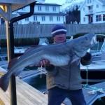 Skreifischen in Norwegen: Nordskot Brygge rockt