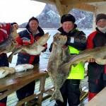 Dorsch und Heilbutt in Norwegen