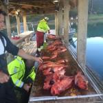 tolle Rotbarsche aus Frovåg Havfiske