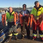 Rotbarschangeln in Frovåg Havfiske