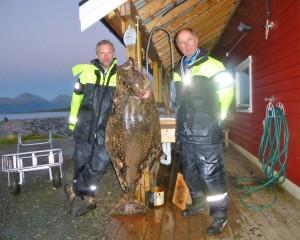 65 kg Heilbutt aus dem Rystraumen in Larseng Kystferie