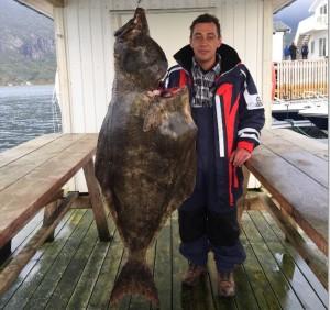Heilbutt mit 53kg in Nordskot Brygge