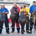 Angelgruppe mit fantastischem Fang in Leka Brygge