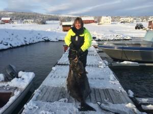 Trine mit ihrem 50kg Heilbutt in Larseng Kystferie