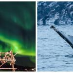 Wale und Nordlichter in Strorekorsnes