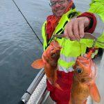 Doppel-Rot-Amberfish