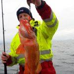Rotbarsch-Amberfish