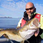 Prachtdorsch Traena Arctic Fishing
